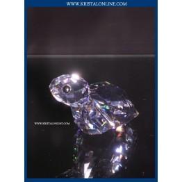 Winwin - Schildpad