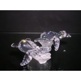 Babyschildpadden op stam