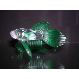 Siamese vechtvis groen