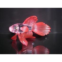 Siamese vechtvis rood