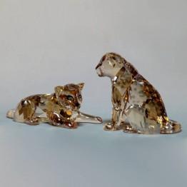 Swarovski Kristal |SCS Leden | SCS - 2019 - Amoerluipaard Jongen | 5428542